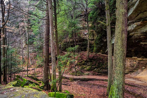 Mossy trees and rocks in the forest of Conkle's Hollow State Nature Preserve, Ohio