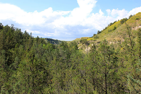 Overlooking the forest at Theodore Roosevelt National Park, North Dakota